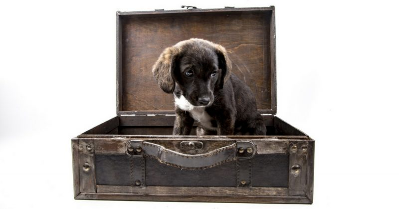 U-Storage Mascotas en una Mudanza