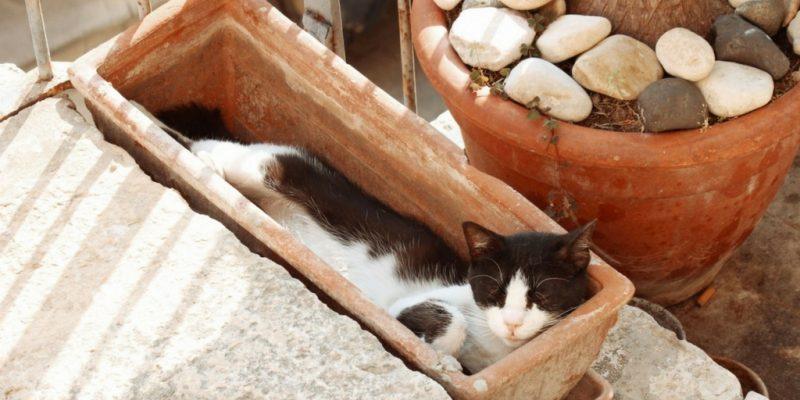 gato mascota dentro de una maceta