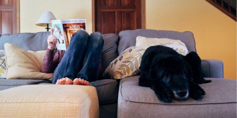 perro mascota en el sillón