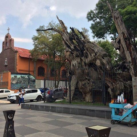 Conociendo la Calzada México-Tacuba