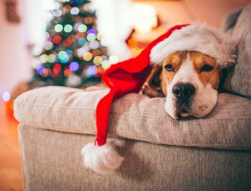 Navidad Lejos De Casa: Consejos Para Disfrutar Sin La Familia