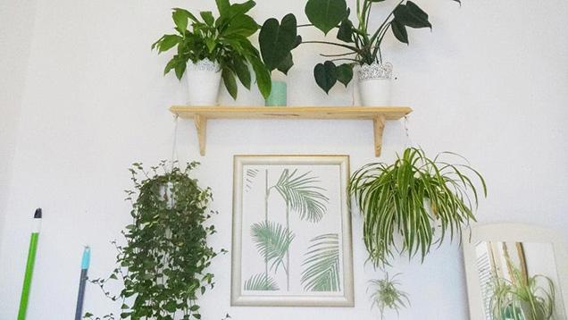 Plantas en Casa para 2019