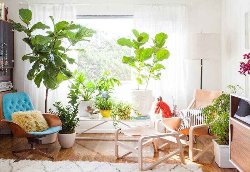 cultivar un jardín
