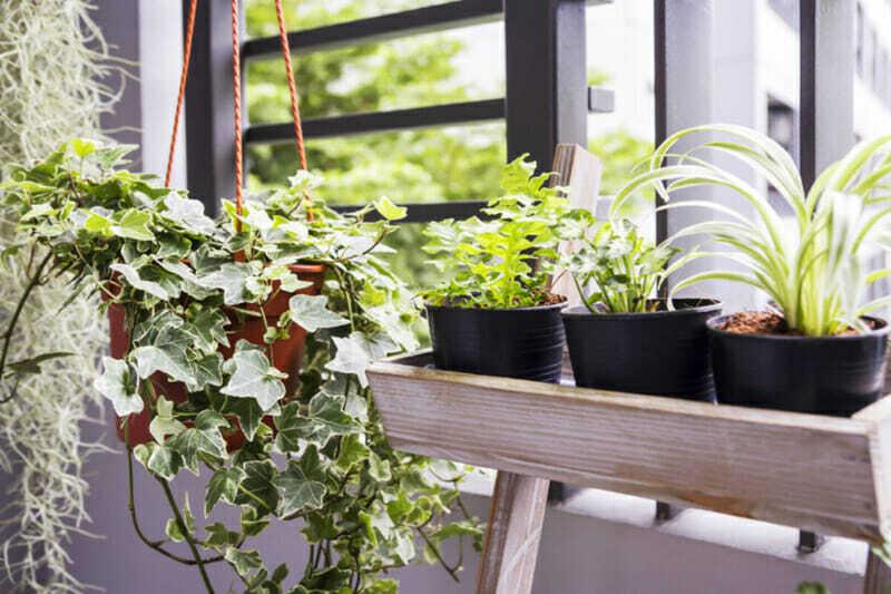 jardín en departamento