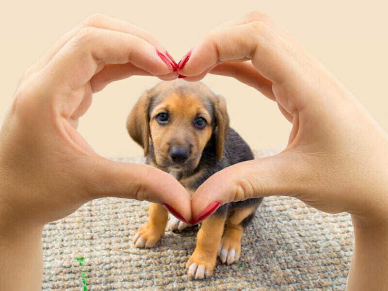 amor a los perros