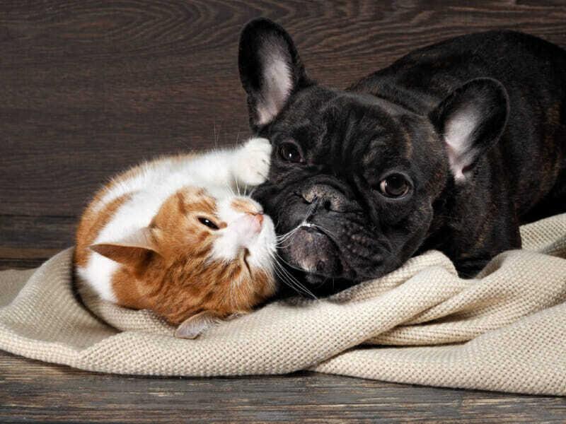 perros y gatos que son amigos