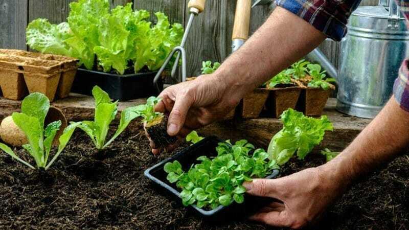 sembrar vegetales y verduras