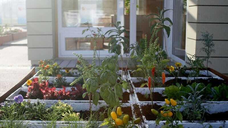 cultivar en tu casa